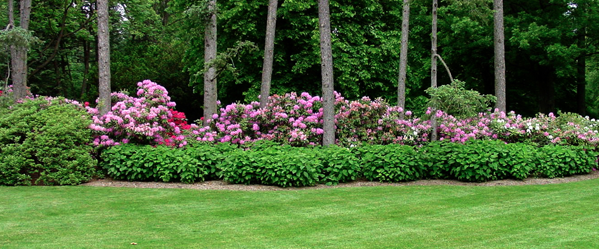 Lawn and Flower Bed maintenance