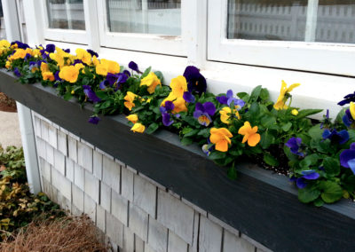 Spring window box.