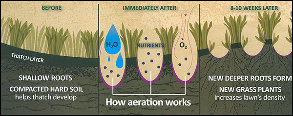 Importance of a Fall Lawn Aeration