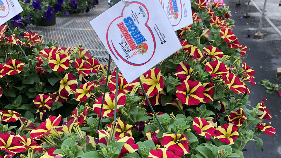 Hanging Baskets for Healthcare Heroes